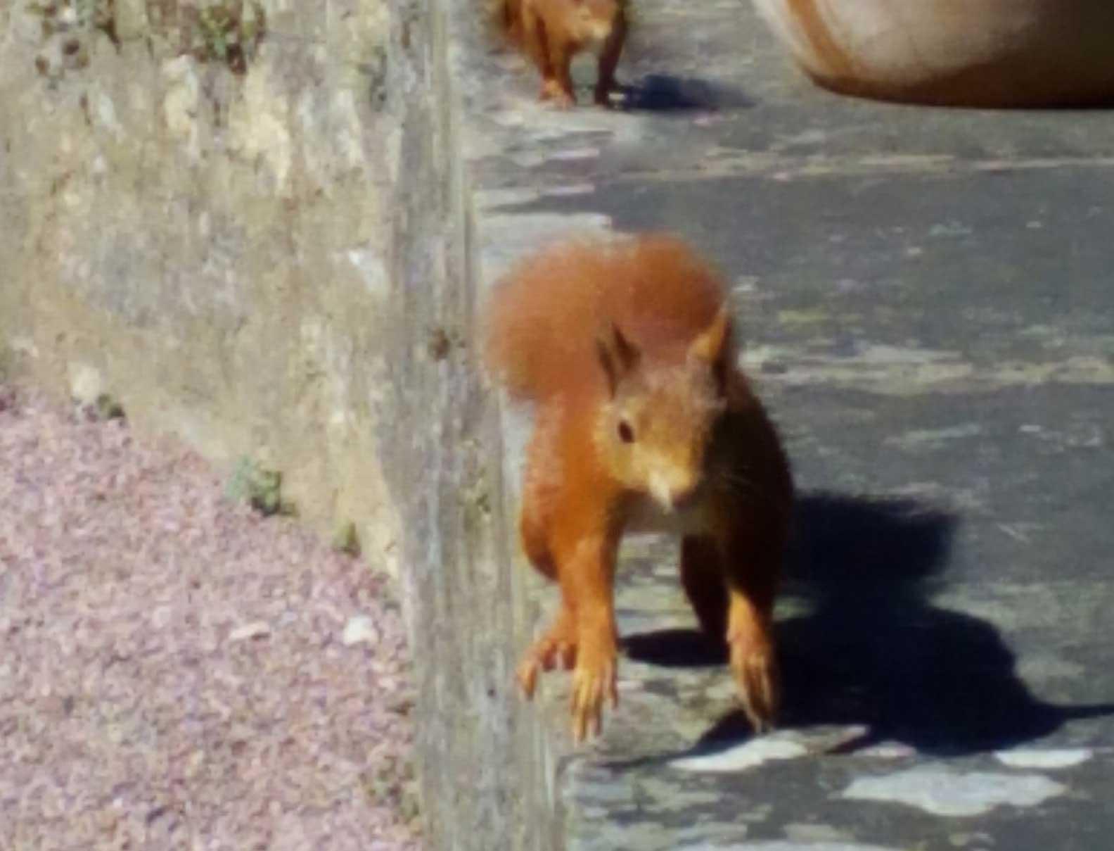 Facettenreiche Tierwelt im Weikersheimer Schlossgarten; Foto: Staatliche Scchlösser und Gärten Baden-Württemberg, OV Weikersheim