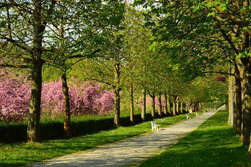 Allee am Obstgarten von Schloss Weikersheim; Foto: Staatliche Schlösser und Gärten Baden-Württemberg, Niels Schubert