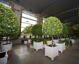 Kübelpflanzen in der Orangerie, Schlossgarten Weikersheim