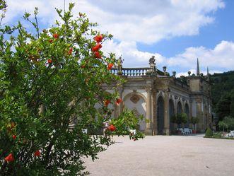 Schloss und Schlossgarten Weikersheim, Granatapfelbaum im Orangeriegarten