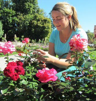 Gestaltung des Rosengartens